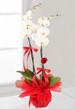 2 dallı beyaz orkide ve 1 adet kırmızı gül  Ankara çiçek siparişi sitesi