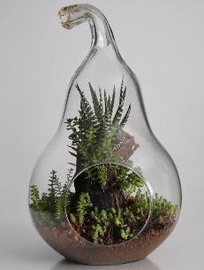 Armut cam küçük boy terrarium  Ankara internetten çiçek siparişi