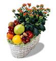 Ankarada çiçek gönderme sitemiz güvenlidir  meyva sepeti ve kalanche
