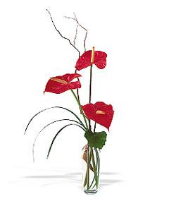 Ankara anneler günü çiçek yolla  cam yada mika Vazoda 3 adet  antoryum
