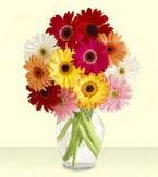 Ankara çiçek yolla , çiçek gönder , çiçekçi   cam yada mika vazoda 15 özel gerbera
