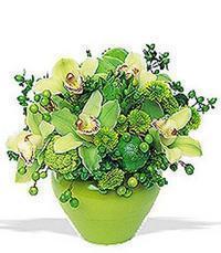 cam yada mika vazoda 5 adet orkide   Ankara uluslararası çiçek gönderme