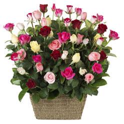 41 adet karisik gül sepeti   Ankara çiçek mağazası , çiçekçi adresleri