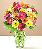 Ankara çiçekçiler  17 adet karisik gerbera
