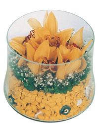Ankara çiçek online çiçek siparişi  cam fanus içerisinde 3 adet kandil orkide