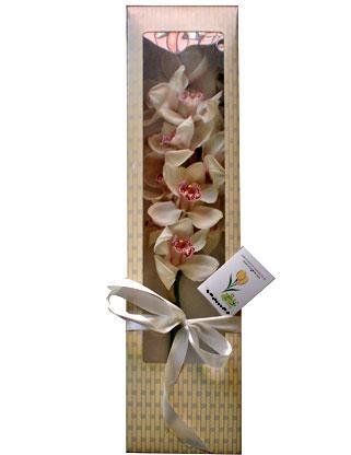 Ankara çiçek siparişi sitesi  ÖZEL SEVENLERE 1 DAL ORKIDE