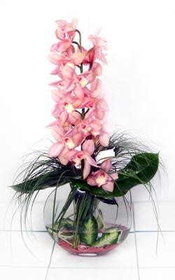 Ankara çiçek servisi , çiçekçi adresleri  cam içerisinde tek dal orkide