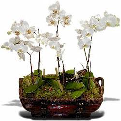 Ankara ucuz çiçek gönder  Sepet içerisinde saksi canli 3 adet orkide