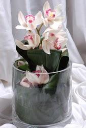 Ankara çiçek servisi , çiçekçi adresleri  Cam yada mika vazo içerisinde tek dal orkide