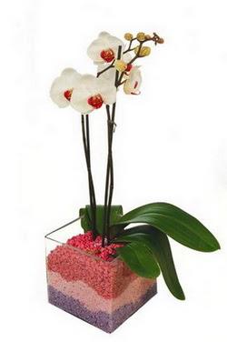 Ankara online çiçekçi , çiçek siparişi  tek dal cam yada mika vazo içerisinde orkide