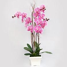 Ankara yurtiçi ve yurtdışı çiçek siparişi  2 adet orkide - 2 dal orkide