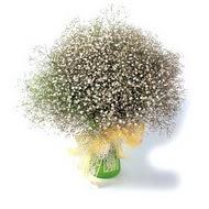 Ankara çiçek siparişi vermek  cam yada mika vazo içerisinde cipsofilya demeti