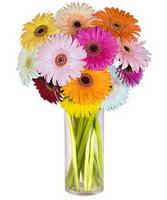 Ankara çiçek servisi , çiçekçi adresleri  Farkli renklerde 15 adet gerbera çiçegi