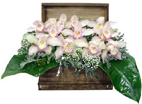 Ankara çiçek satışı  sandik içerisinde 1 dal orkide