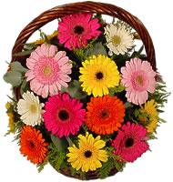 Sepet içerisinde sicak sevgi çiçekleri  Ankara hediye çiçek yolla