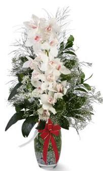 Ankara anneler günü çiçek yolla  cam içerisinde 1 dal orkide çiçegi
