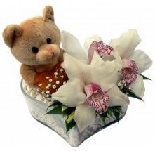 Ankara çiçek gönderme  15 cm boyutlarinda ayicik ve 1 kandil orkide