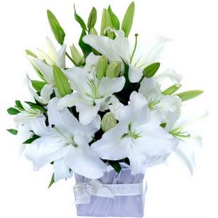 Ankara çiçek gönderme  2 dal cazablanca vazo çiçeği