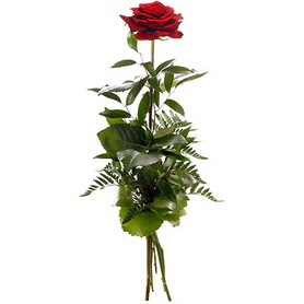 Ankara uluslararası çiçek gönderme  1 adet kırmızı gülden buket