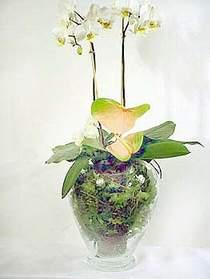 Ankara çiçek , çiçekçi , çiçekçilik  Cam yada mika vazoda özel orkideler