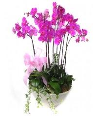 9 dal orkide saksı çiçeği  Ankara cicek , cicekci