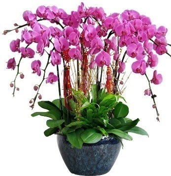 9 dallı mor orkide  Ankara çiçekçi mağazası