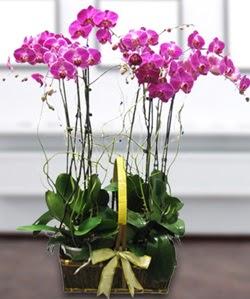 4 dallı mor orkide  Ankara cicek , cicekci
