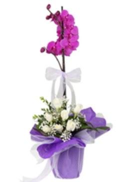 1 dal mor orkide ve 11 adet beyaz gül  Ankara çiçekçi mağazası