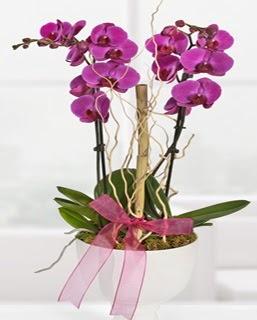 2 dallı nmor orkide  Ankara çiçek siparişi sitesi