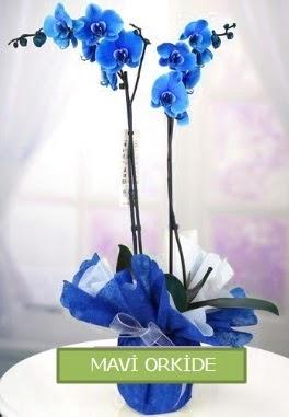 2 dallı mavi orkide  Ankara çiçek online çiçek siparişi
