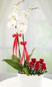 2 dallı beyaz orkide ve 7 kırmızı gül  Ankara hediye çiçek yolla