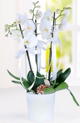 3 dallı beyaz orkide  Ankara çiçek gönderme