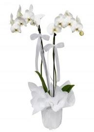 2 dallı beyaz orkide  Ankara cicek , cicekci
