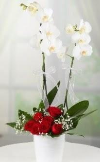 2 dallı beyaz orkide 7 adet kırmızı gül  Ankara çiçekçi mağazası