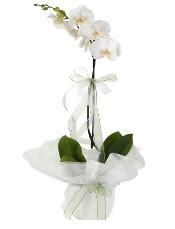 1 dal beyaz orkide çiçeği  Ankara çiçek mağazası , çiçekçi adresleri