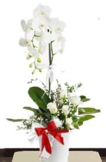 Tek dallı beyaz orkide 5 beyaz gül  Ankara anneler günü çiçek yolla
