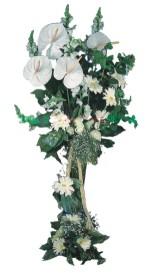 Ankara çiçek siparişi vermek  antoryumlarin büyüsü özel