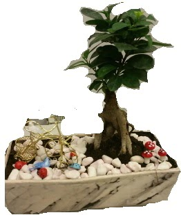 Japon ağacı bonsai satışı  Ankara çiçek siparişi sitesi