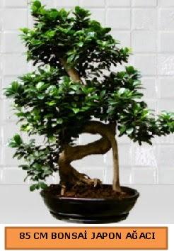 85 CM Japon ağacı Bonsai saksı bitkisi  Ankara çiçek satışı