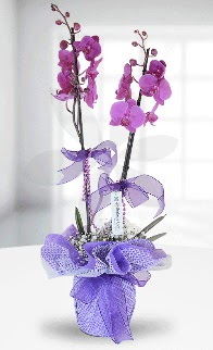 Çift dallı mor orkide LİKE MARKADIR  Ankara çiçek siparişi sitesi