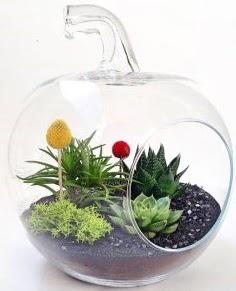 Elma Terrarium orta boy 5 kaktüs  Ankara hediye sevgilime hediye çiçek