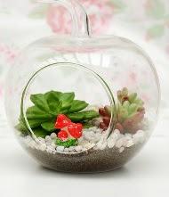 Küçük elma terrarium 3 kaktüs  Ankara kaliteli taze ve ucuz çiçekler