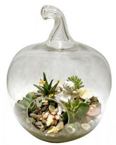 Orta boy elma terrarium 5 kaktüs  Ankara güvenli kaliteli hızlı çiçek