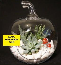 5 kaktüslü Elma terrarium orta boy  Ankara kaliteli taze ve ucuz çiçekler