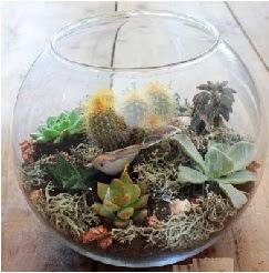 Cam fanusta 7 kaktüslü terrarium  Ankara 14 şubat sevgililer günü çiçek