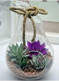 Orta boy armut 3 kaktüs terrarium  Ankara hediye sevgilime hediye çiçek