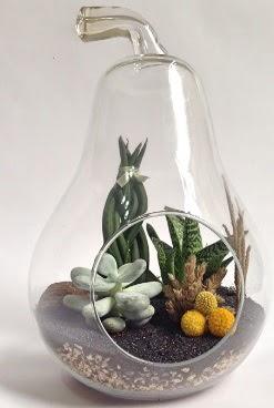 Orta boy armut 5 kaktüs terrarium  Ankara çiçek satışı