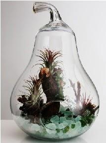 Orta boy Armut 6 adet kaktüs terrarium  Ankara 14 şubat sevgililer günü çiçek