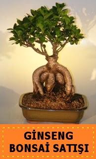 Ginseng bonsai satışı japon ağacı  Ankara güvenli kaliteli hızlı çiçek