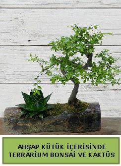 Ahşap kütük bonsai kaktüs teraryum  Ankara çiçek servisi , çiçekçi adresleri